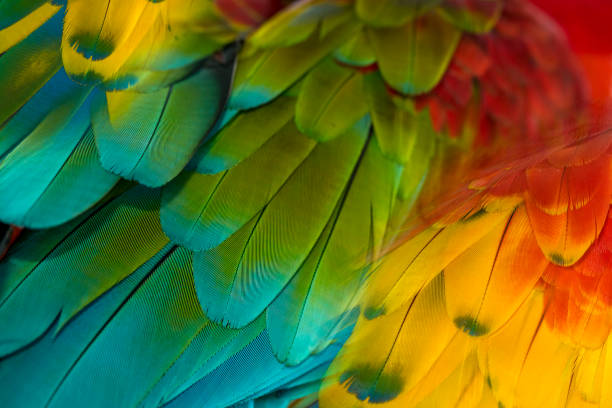 macaw feathers - green winged macaw stock photos and pictures