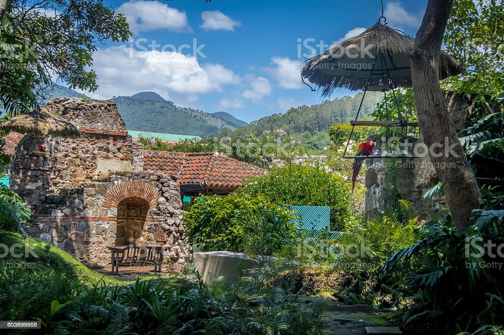 Macaw in colonial convent ruins with mountains - foto de stock