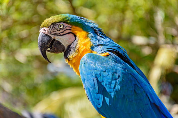 Macaw in the vegetation of the rainforest stock photo