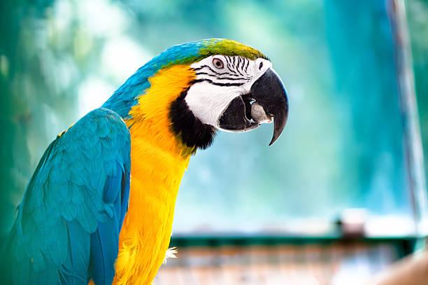 ara papagei in der wilden dschungel - urbanara stock-fotos und bilder