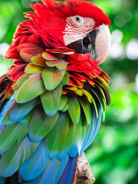 Macaw parrot Macaw parrot close up parrot stock pictures, royalty-free photos & images