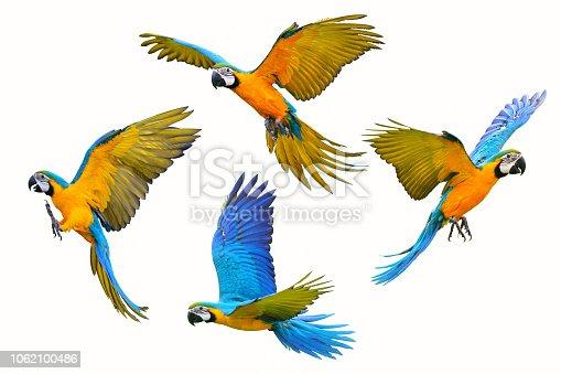 istock Macaw parrot 1062100486