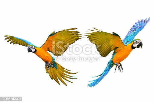 istock macaw parrot 1062150004