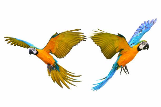 Macaw parrot picture id1062150004?b=1&k=6&m=1062150004&s=612x612&w=0&h=2sndfzuvhmeyga5zskwqqwv20nsxmcgqefi5wdnlq2e=