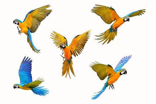 istock macaw parrot 968960324