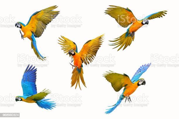 Macaw parrot picture id968960324?b=1&k=6&m=968960324&s=612x612&h=xcjpzngofxwxlt74lawrrc cum5b1bz9wyomc3lcdlg=