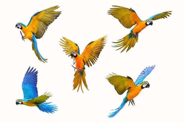 Macaw parrot picture id968960324?b=1&k=6&m=968960324&s=612x612&w=0&h=tswi76vqm3fbz4yatqy1bml2uw9nqpjrlbii0bkrbwq=