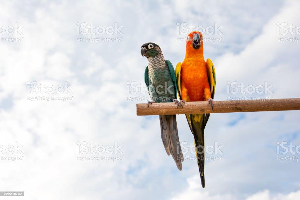 Ara papegaaien op gedroogde boomtak met blauwe hemelachtergrond foto