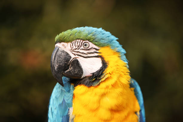 macaw - green winged macaw stock photos and pictures