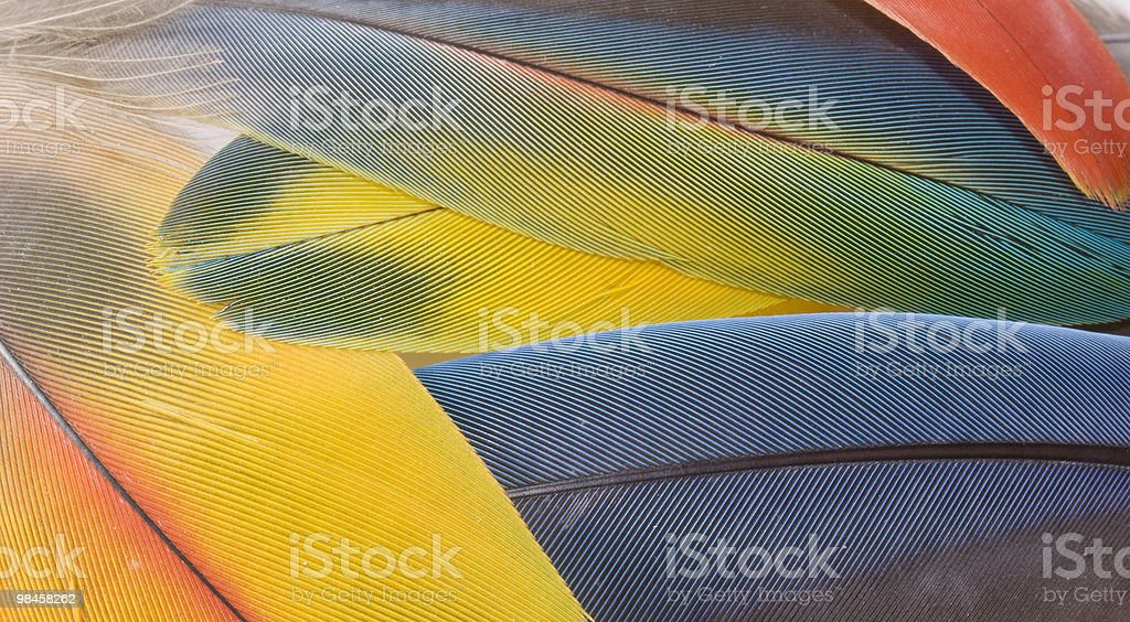 Macaw's feathers royalty-free stock photo