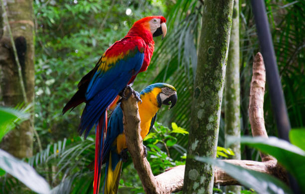 Maccaw animais selvagens - Foz do Iguaçu - foto de acervo