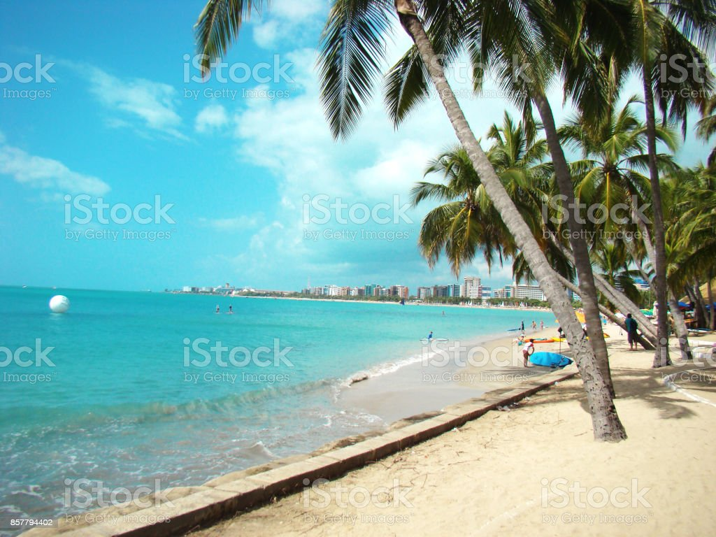 Maceio Beach landscape with coconut tree stock photo