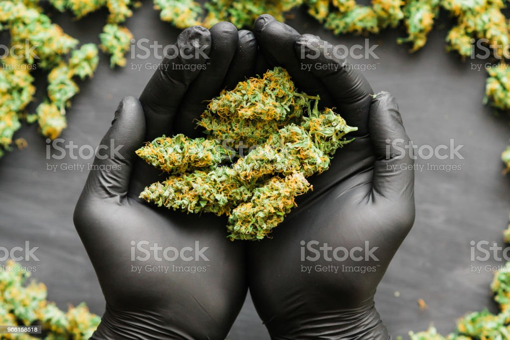 Mach fresh green buds of cannabis in hand Joint in hand A lot of marijuana fresh buds of cannabis many weed. Copy spase Copy-space - Royalty-free Addiction Stock Photo