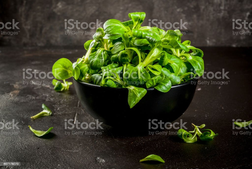 Mache salad, raw stock photo