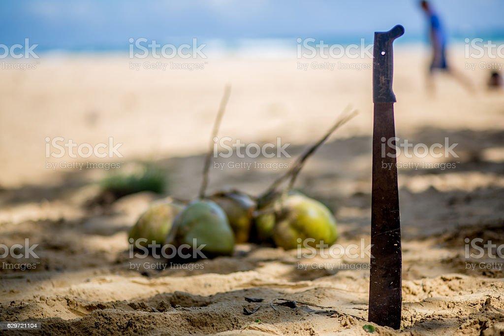 Machete' Stuck next to coconuts on tropical beach stock photo