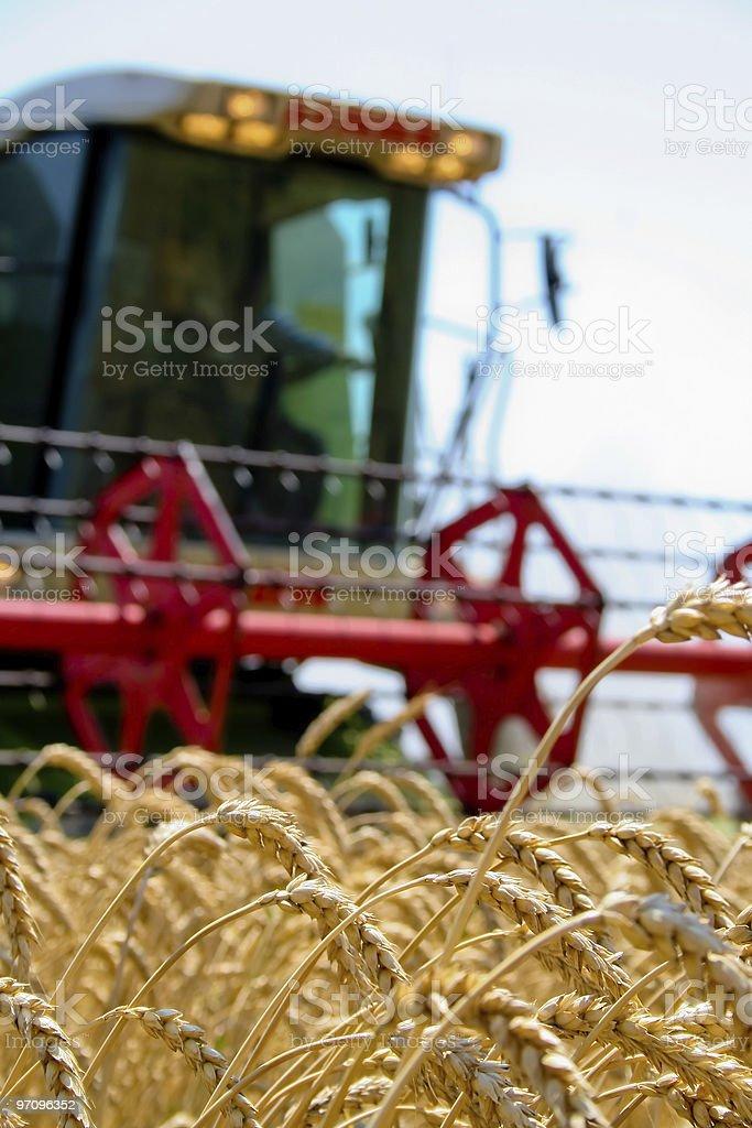 Machine harvesting the corn field royalty-free stock photo