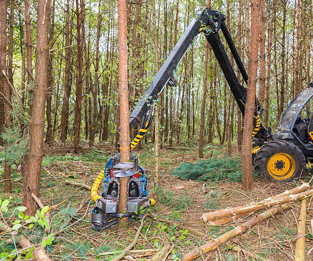 machine sawing pine trees in forest - logging equipment stock photos and pictures