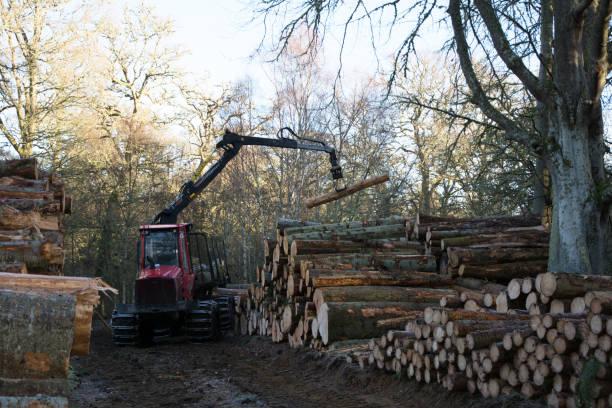 Machine stacking logs stock photo