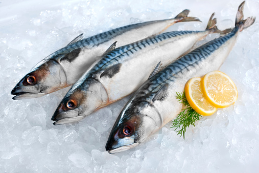 istock Mackerel fish on ice 155606540
