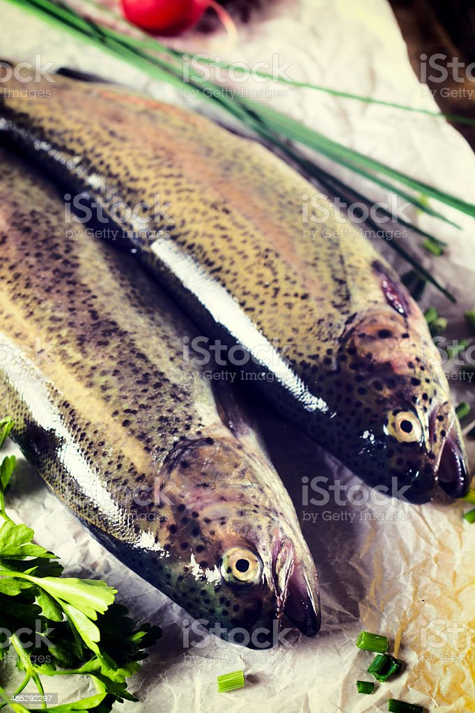 Mackerel fishs stock photo