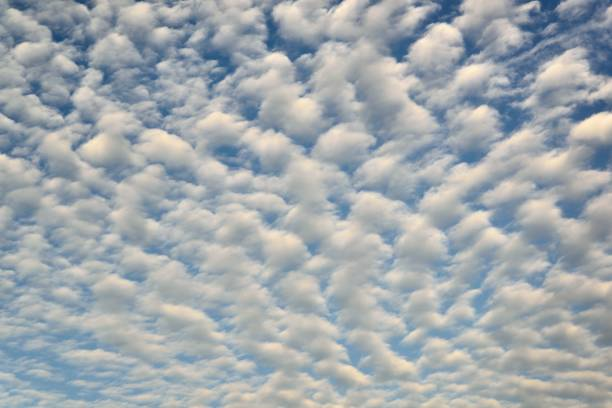 Mackerel or Buttermilk Sky A sky filled with altocumulus clouds, called either a Mackerel Sky or a Buttermilk Sky, depends if you're a coastal person or a plains person altocumulus stock pictures, royalty-free photos & images