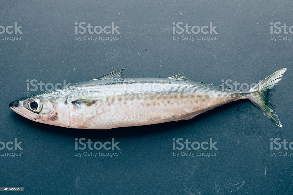 Mackerel stock photo