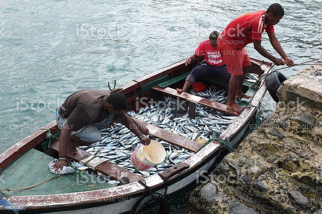Mackerels in a small boat. royalty-free stock photo