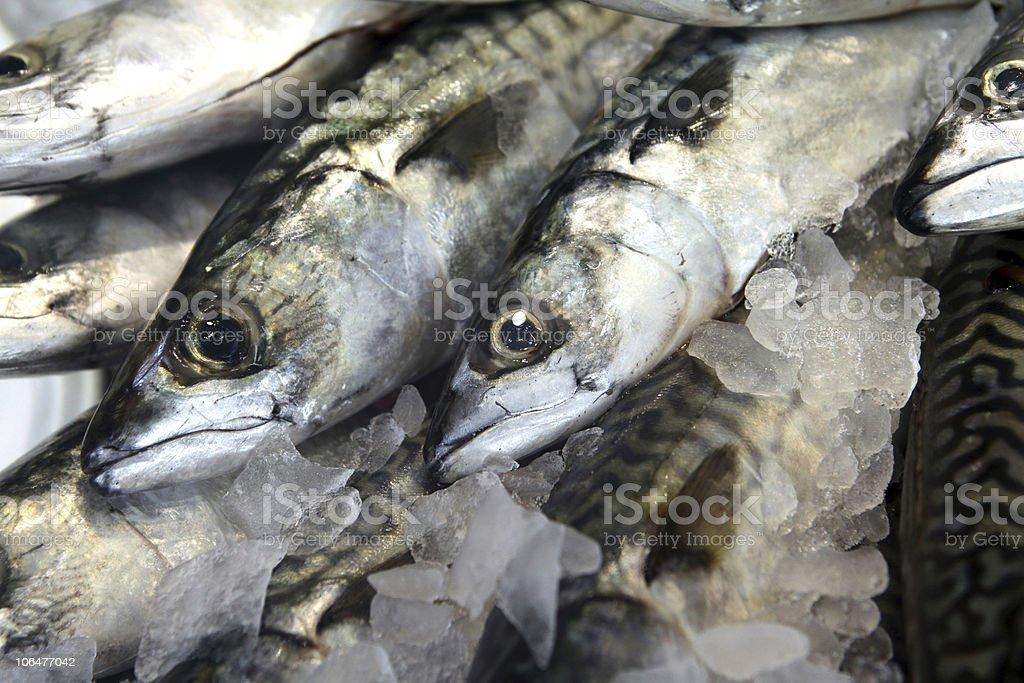 Mackerels royalty-free stock photo