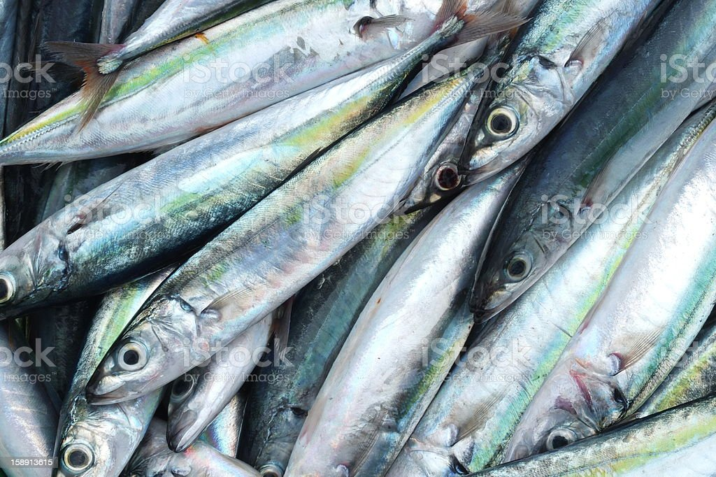 Mackerels stock photo