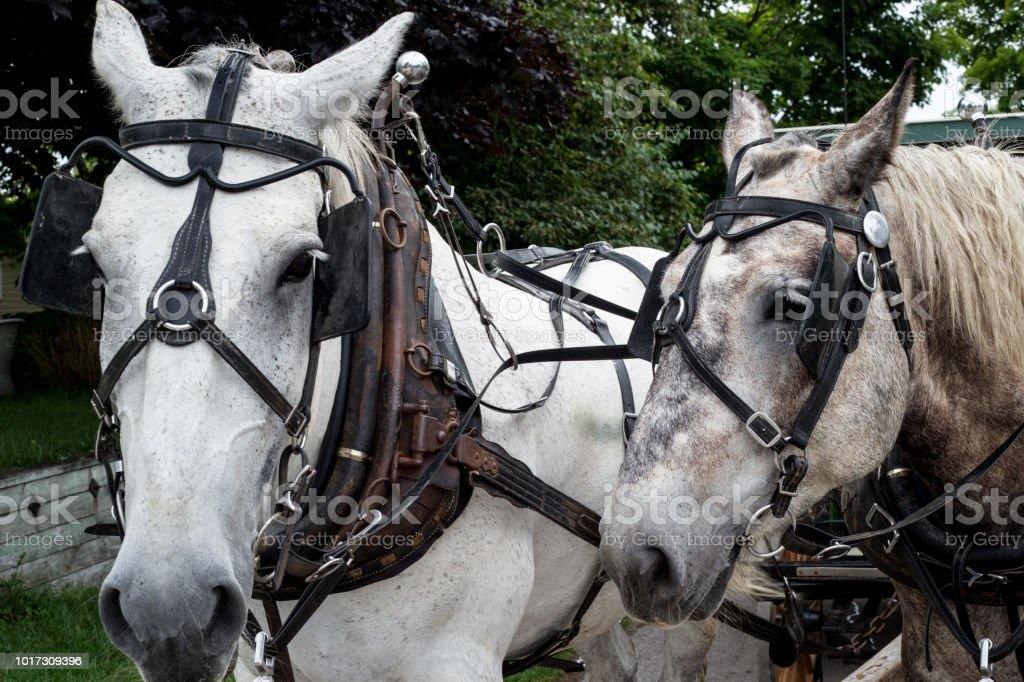 Mackinac Island carriage horses on the trail in the streets and backwoods on a cloudy day stock photo