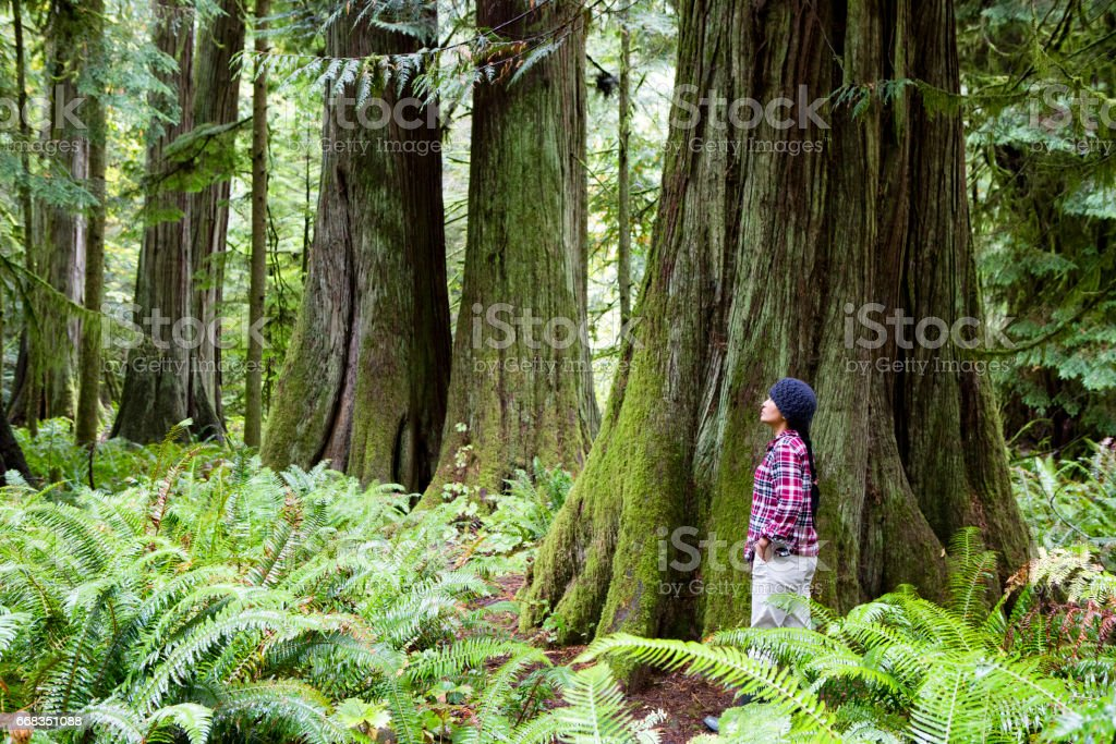 MacMillan Provincial Park Cathedral Grove Vancouver Island Wonderlust Hiking Journey stock photo