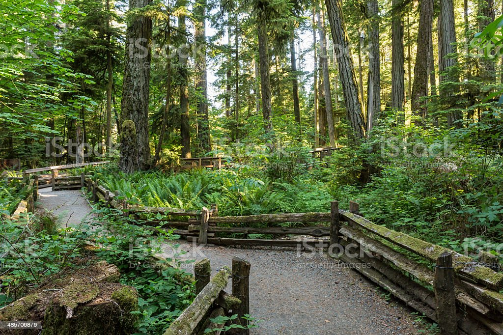 MacMillan Provincial Park Trails stock photo