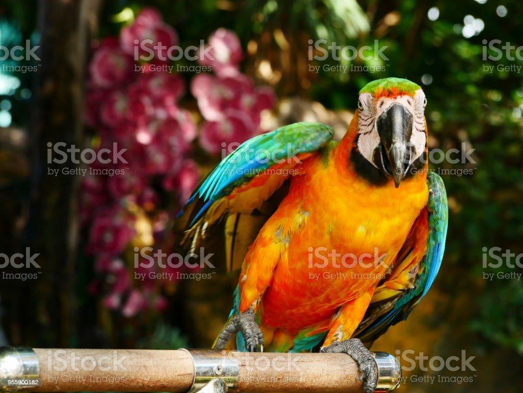 Macore pássaro - foto de acervo