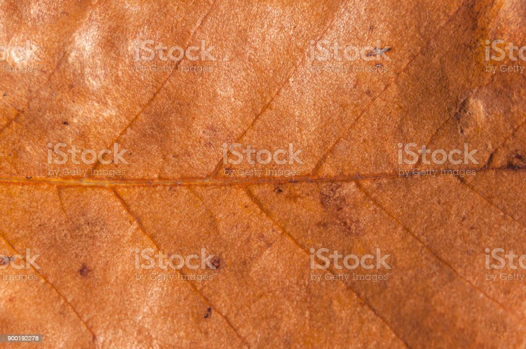 Macro brown natural pattern color from park tree structure