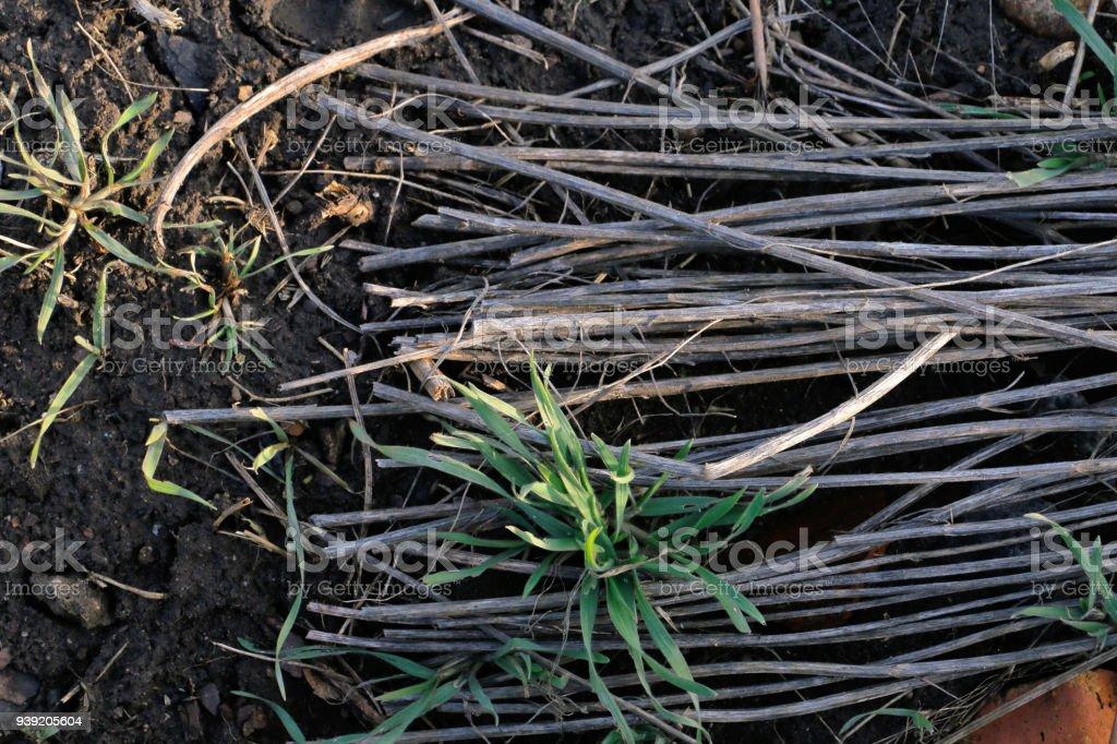 macro brushwood stock photo