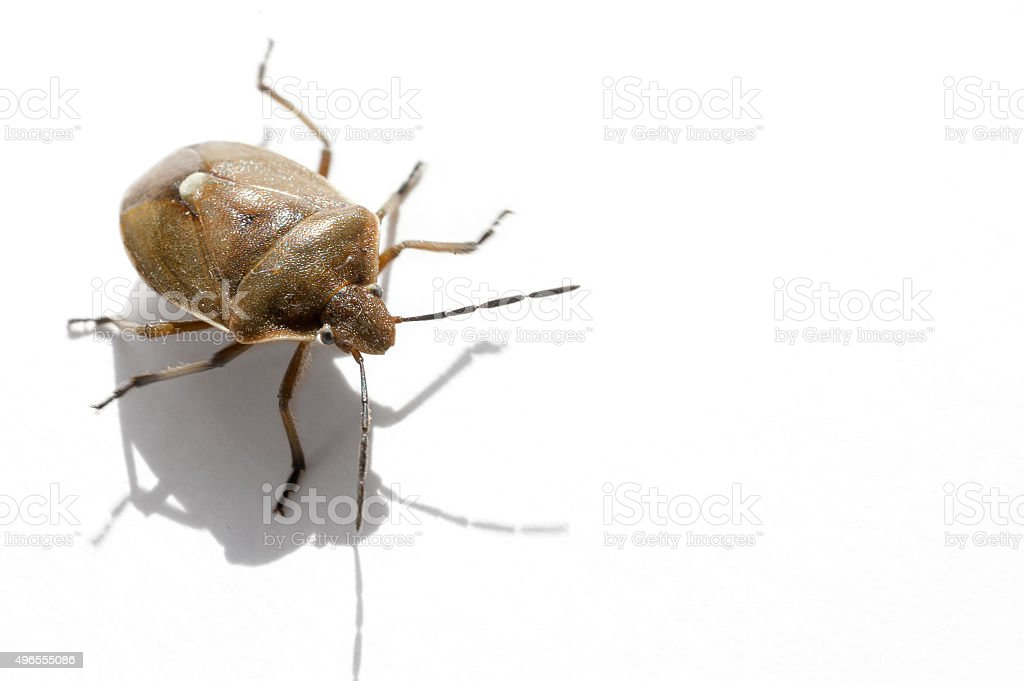 Macro bug isolated stock photo
