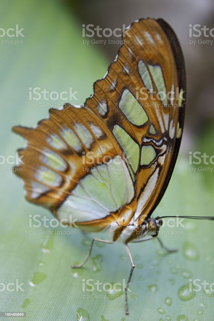 Macro Butterfly royalty-free stock photo