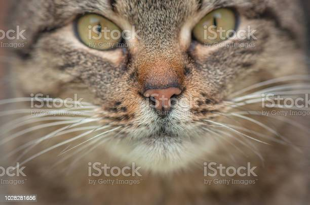 Macro cat muzzle picture id1028281656?b=1&k=6&m=1028281656&s=612x612&h=pujhmwxaptdajbcpodze20fgs6axch4muc4updlk1e4=