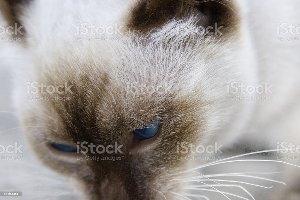 macro cat royalty-free stock photo