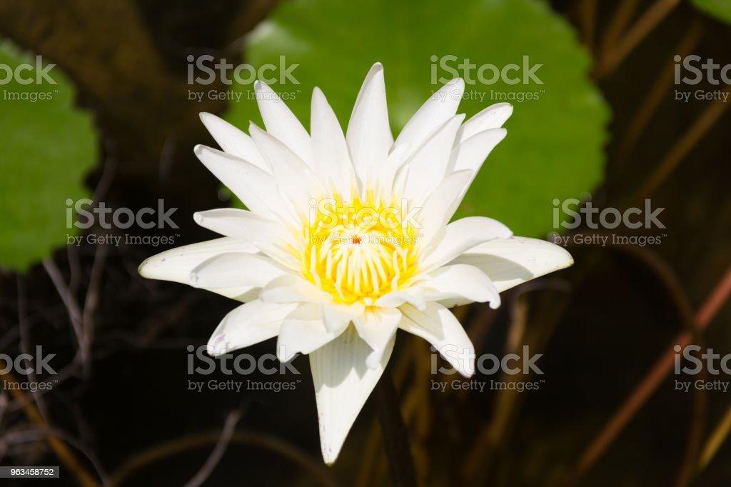 Makro, zbliżenie na pokojowy symbol przyrody - Zbiór zdjęć royalty-free (Bez ludzi)