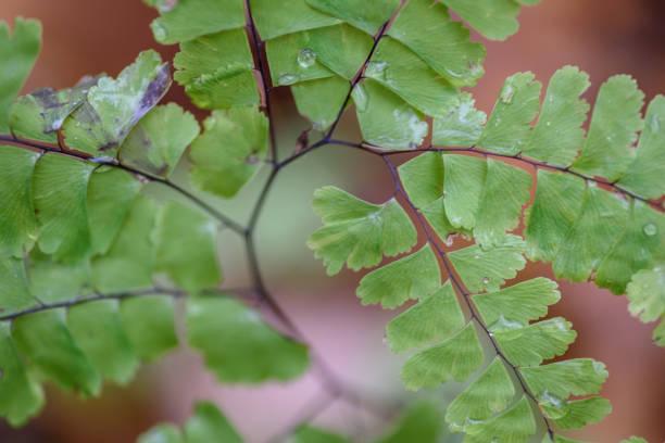 森林中蕨類植物的宏觀特寫鏡頭 - 重複螺旋型 個照片及圖片檔