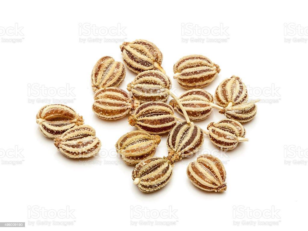 Macro closeup of Organic Ajwain. stock photo