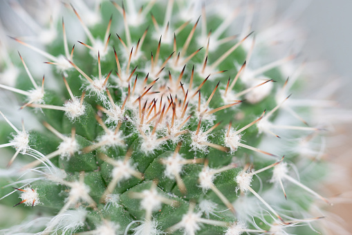 Macro Closeup Of Small Cactus For Nature Background — стоковые фотографии и другие картинки Без людей