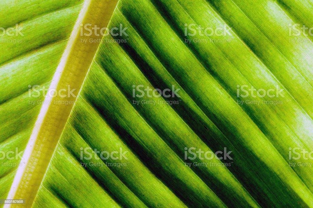 Macro Closeup Plant Palm Leaf stock photo