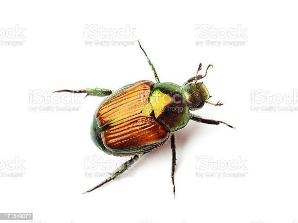 Subject: Macro close-up top view of a Japanese Beetle isolated on white background.
