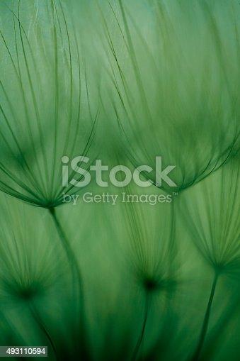 istock Macro dandelion seed 493110594