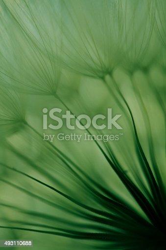 istock Macro dandelion seed 493110688