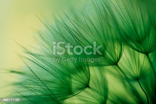 istock Macro dandelion seed 493111192