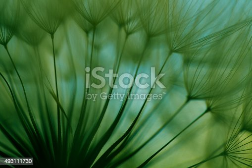 istock Macro dandelion seed 493111730