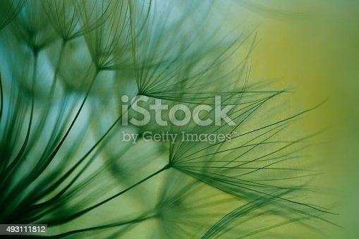 istock Macro dandelion seed 493111812